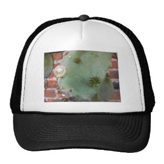 Wall Cactus 3 Hat