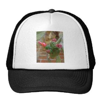 Wall Cactus 4 Mesh Hats