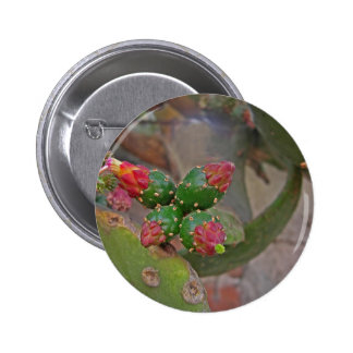 Wall Cactus 5 2 Inch Round Button