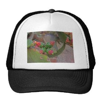 Wall Cactus 5 Hats