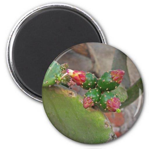 Wall Cactus 6 Fridge Magnets