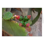 Wall Cactus 6 Greeting Cards