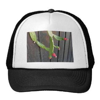 Wall Cactus 7 Trucker Hats