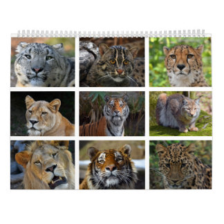 Wall calendar with photos of wild cats