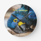 Wall clock featuring cute Hyacinth Macaw parrot