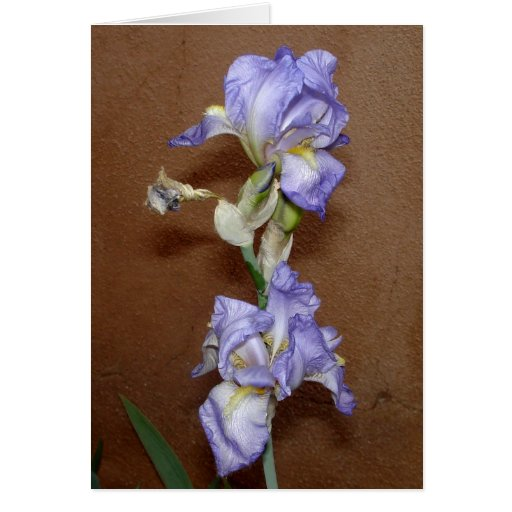 Wall Flowers (Iris) Greeting Card