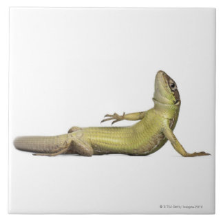Wall lizard lying down - Podarcis muralis Ceramic Tile