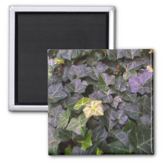 Wall of Ivy 2 Inch Square Magnet