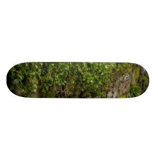 Wall Of Ivy Skateboard Deck