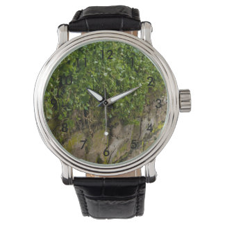Wall Of Ivy Watches