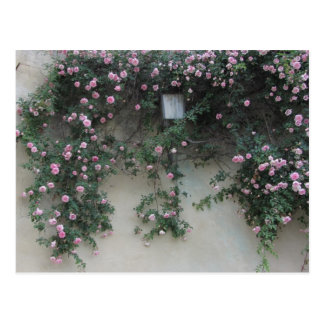 Wall of Roses Postcard