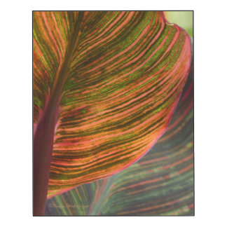 WALL PANEL, CANNA LEAVES/ORANGE AND GREEN COLORS WOOD PRINT