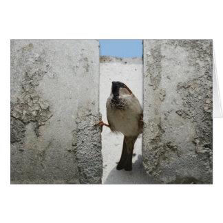 Wall sparrow card