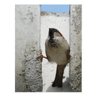 Wall sparrow postcard