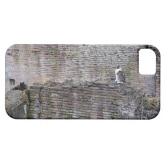 Wall with cats sitting on it iPhone SE/5/5s case