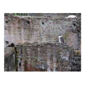 Wall with cats sitting on it postcard