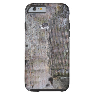 Wall with cats sitting on it tough iPhone 6 case