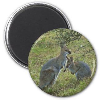 wallabies fridge magnets