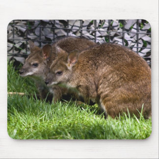 Wallabies Mouse Pad