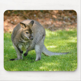 Wallabies of Bennet Mouse Pad