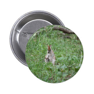 WALLABY AND JOEY RURAL QUEENSLAND AUSTRALIA BUTTON