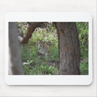 WALLABY AND JOEY RURAL QUEENSLAND AUSTRALIA MOUSE PAD