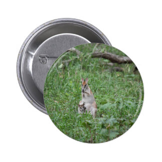 WALLABY AND JOEY RURAL QUEENSLAND AUSTRALIA PINBACK BUTTON