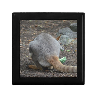 wallaby back view looking over animal gift boxes
