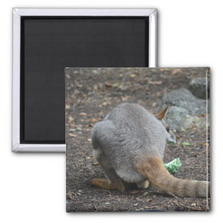 wallaby back view looking over animal fridge magnet