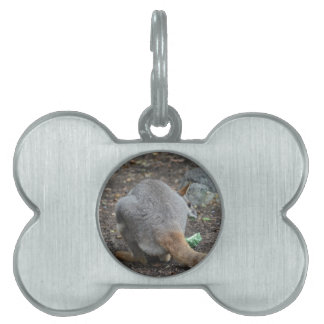 wallaby back view looking over animal pet name tags