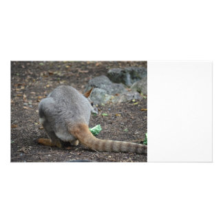 wallaby back view looking over animal photo card