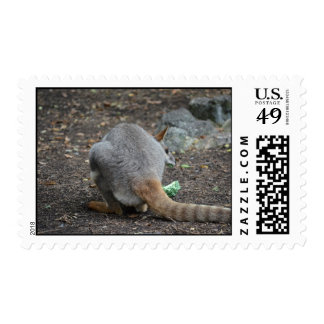wallaby back view looking over animal postage stamps