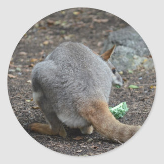 wallaby back view looking over animal classic round sticker