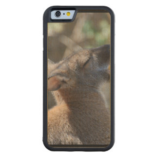 Wallaby Carved® Maple iPhone 6 Bumper