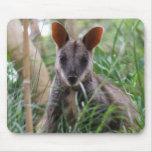 Wallaby de roca tapete de raton