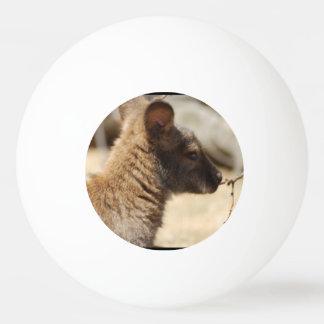 Wallaby dulce pelota de tenis de mesa