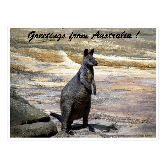 wallaby greetings postcard