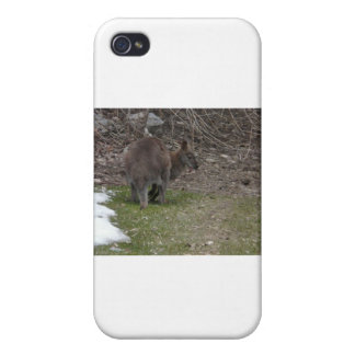 wallaby iPhone 4 cover