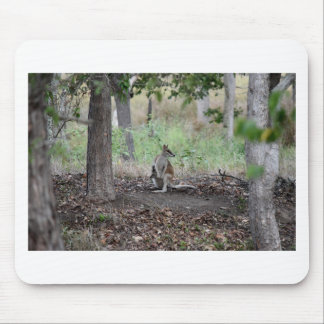 WALLABY & JOEY RURAL QUEENSLAND AUSTRALIA MOUSE PAD