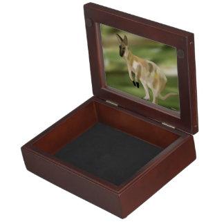 Wallaby Jump Memory Box
