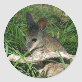 Wallaby lindo del bebé pegatina redonda