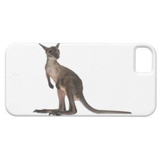 Wallaby - Macropus robustus (3 months old) iPhone 5 Cover