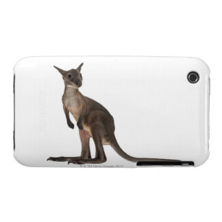 Wallaby - Macropus robustus (3 months old) iPhone 3 Case-Mate Cases