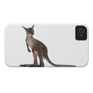 Wallaby - Macropus robustus (3 months old) iPhone 4 Covers