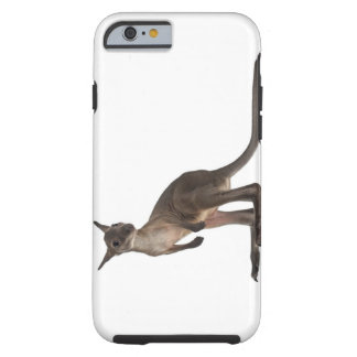 Wallaby - Macropus robustus (3 months old) Tough iPhone 6 Case