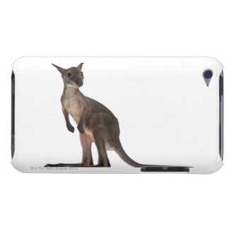 Wallaby - Macropus robustus (3 months old) Case-Mate iPod Touch Case