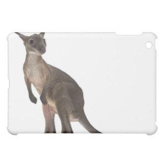 Wallaby - Macropus robustus (3 months old) iPad Mini Cases