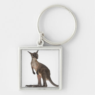 Wallaby - Macropus robustus (3 months old) Keychain