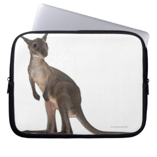 Wallaby - Macropus robustus (3 months old) Laptop Computer Sleeves