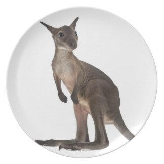 Wallaby - Macropus robustus (3 months old) Melamine Plate